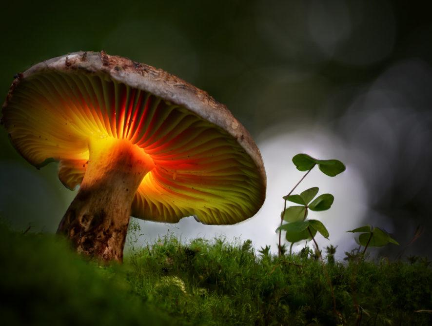 Coming soon, glowing mushroom light painting tutorial.